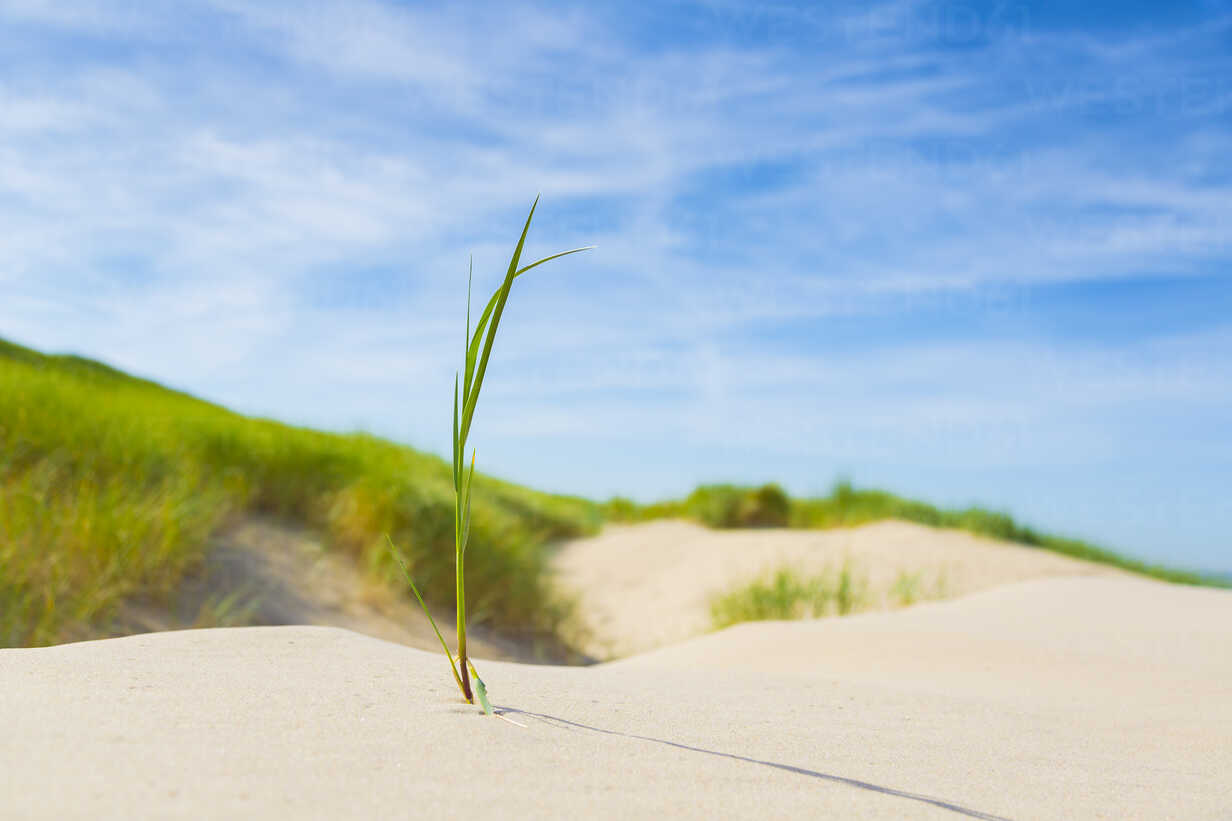Netherlands, Grass growing on sand dunes - CPF000002 - Christoph Prall/Westend61