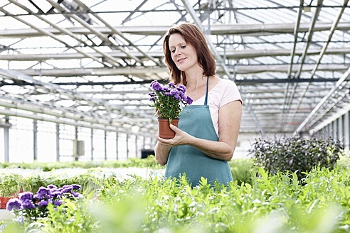 Germany, Bavaria, Munich, Mature woman in greenhouse with aster plants - RREF000002