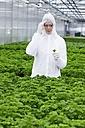 Germany, Bavaria, Munich, Scientist examining parsley plants in greenhouse - RREF000034
