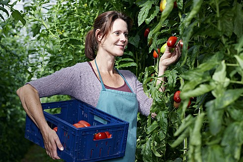 Germany, Bavaria, Munich, Mature woman harvesting tomatoes in greenhouse - RREF000039
