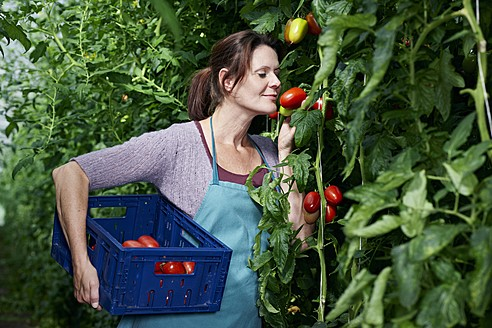 Germany, Bavaria, Munich, Mature woman harvesting tomatoes in greenhouse - RREF000040