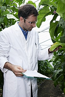 Germany, Bavaria, Munich, Scientist in greenhouse examining aubergine plants - RREF000050