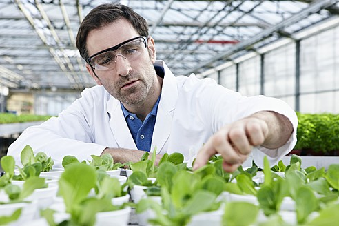 Germany, Bavaria, Munich, Scientist in greenhouse examining corn salad plants - RREF000057