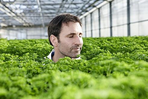 Germany, Bavaria, Munich, Mature man in greenhouse between parsley plants - RREF000061