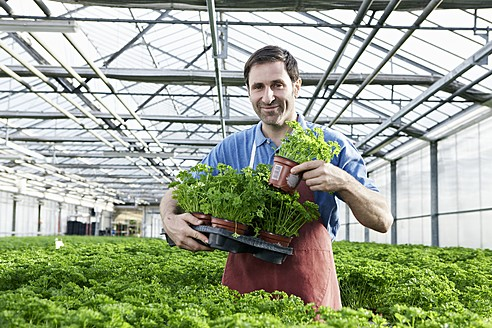 Germany, Bavaria, Munich, Mature man in greenhouse with parsley plants - RREF000065
