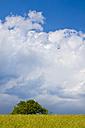 Germany, Grassland with tree - CPF000006