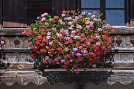 Germany, Bavaria, Geranium on window sill - TCF002914