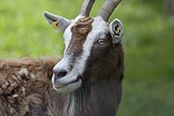 Germany, Bavaria, Close up of goat - TCF002915