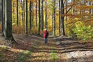 Germany, Saxony, Mature woman walking in beech forest - JTF000166