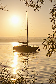 Germany, Bavaria, Sailing boat on Lake Ammersee, reed in foreground - UMF000522