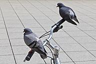 Germany, Baden Wuerttemberg, Stuttgart, Pigeons perching on handlebar of bicycle - WDF001290