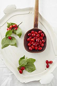 Cornel cherries in wooden spoon on tray - ECF000113