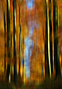 Germany, Saxony, Autumn forest in october - JTF000182