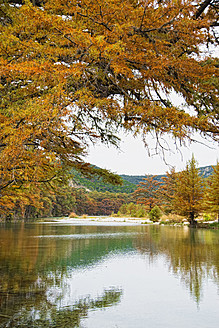 USA, Texas, Cypress tree with golden leaves in Frio River - ABAF000366