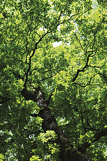 Germany, Hesse, Frankfurt, View of tree, close up - MUF001261