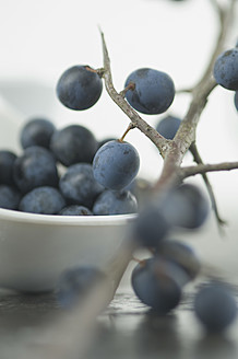 Blackthorn berries in bowl, close up - ASF004713
