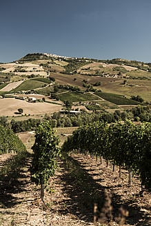 Italy, View of vineyard - KA000048
