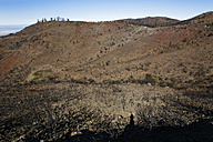 Spain, La Gomera, Fire damage in Garajonay National Park - SIE003118