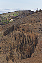 Spain, La Gomera, Fire damage in Garajonay National Park - SIE003119