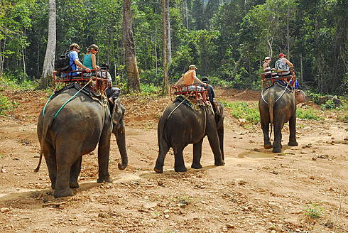 Thailand, Elephant trekking in tropical forest of Koh Chang Island at Ban Kwan Chang Elephant camp - MIZ000124