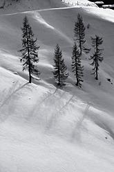 Austria, Tyrol, Winter scenery of Brechhorn - FF001328