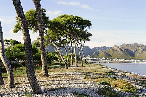 Spain, View of conifer trees in bay of Port de Pollenca - MIZ000207