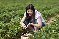 Germany, Bavaria, Young Japanese woman picking strawberries in field - FLF000222