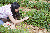Germany, Bavaria, Young Japanese woman picking strawberries in field - FLF000213
