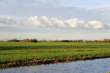 Netherlands, View of landscape between Gouda and Bodegraven - MIZ000173