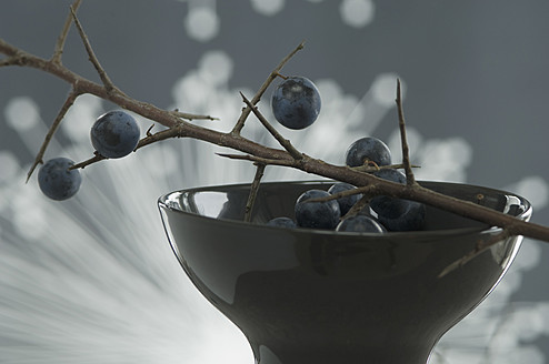 Blackthorn in bowl and fibre optic in background, close up - ASF004789