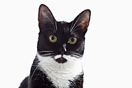 Black and white cat against white background, close up - CSF016625