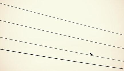 Austria, Bird sitting on power supply line - WVF000313