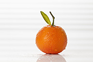 Fresh clementine on white background, close up - CSF016794