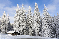 Germany, Bavaria, Snowy wooden hut and trees at Bavaria Forest - FOF004842
