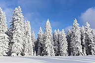 Germany, Bavaria, Snow covered trees at Bavarian Forest - FOF004843