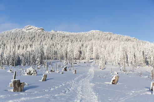 Germany, Bavaria, Track to mountain Grosser Arber at Bavarian Forest - FOF004844