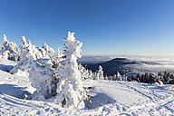 Germany, Bavaria, Snow covered trees at Bavarian Forest - FOF004853