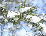 Germany, Pine branch with snow - HLF000083
