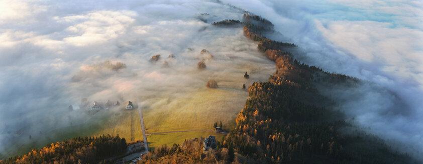 Austria, Salzkammergut,Trees covered with fog - WW002712
