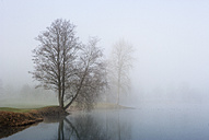 Austria, View of trees in morning fog at Mondsee Lake - WW002752