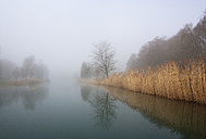 Austria, View of trees with reed in morning fog at Mondsee Lake - WWF002758