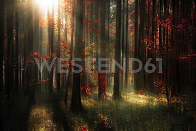 Germany, Baden Wuerttemberg, View of autumn forest - BSTF000003 - Brigitte Stehle/Westend61