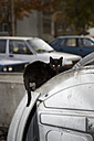 Bulgaria, Black cat on car - TK000048