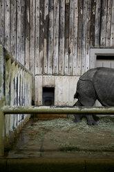 Germany, Animal in zoo - TK000079