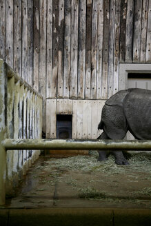 Germany, Animal in zoo - TK000079