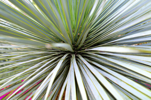 Palm tree leaves, close up - MHF000132