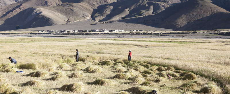 Tibet, Tibetan Plateau, Settlement, Field work in autumn - ATA000019