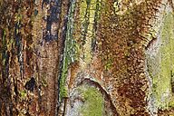 Germany, Dead tree trunk, close up - JTF000312