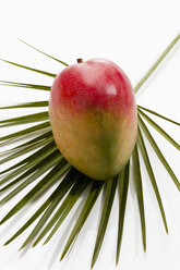 Mango on palm leaf on white background - CSF018043