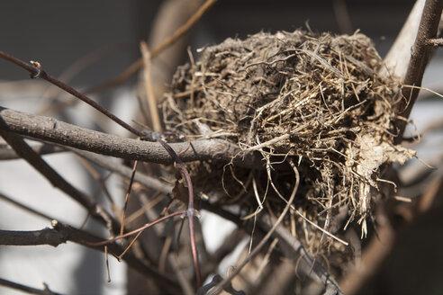 Germany, Bavaria, Bird's nest on branch - TD000011